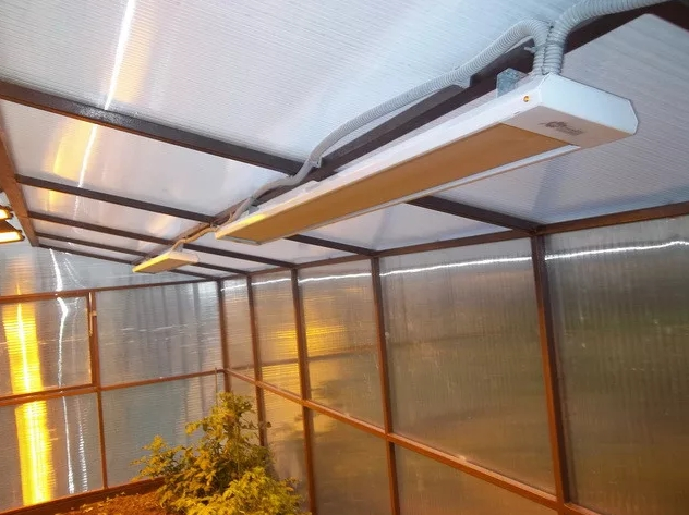 Бизнес на выращивании томатов