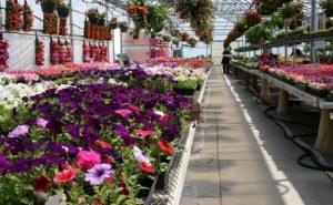 Бизнес идея: выращивание цветов в теплице