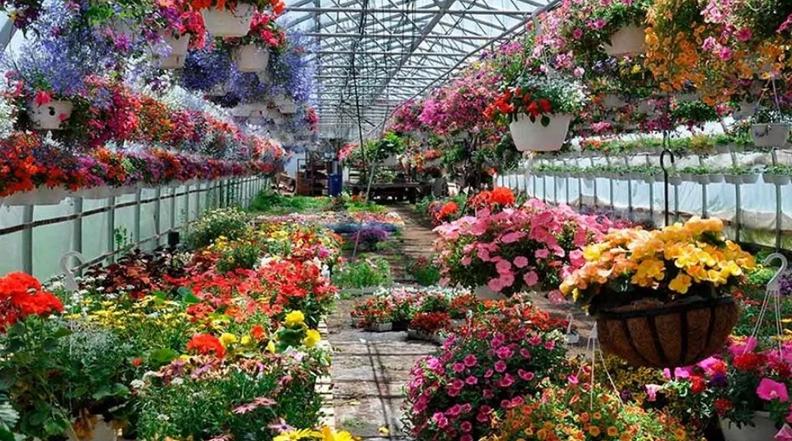 Выбор цветов для теплицы