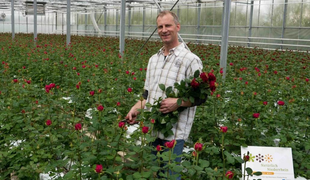 Производственный план выращивания цветов