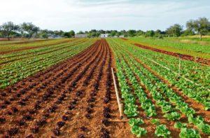 Как повысить урожайность:доступные способы