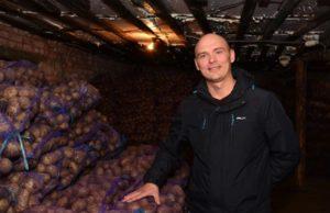 Краткое руководство по бизнесу на выращивании картофеля