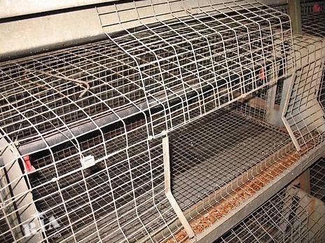 Клетка для кролей