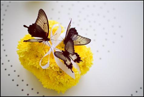 Разведение бабочек как бизнес
