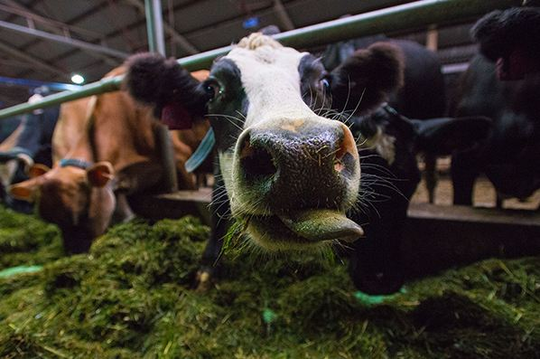 Холдинг «АгриВолга» о перспективах производства еды без консервантов.