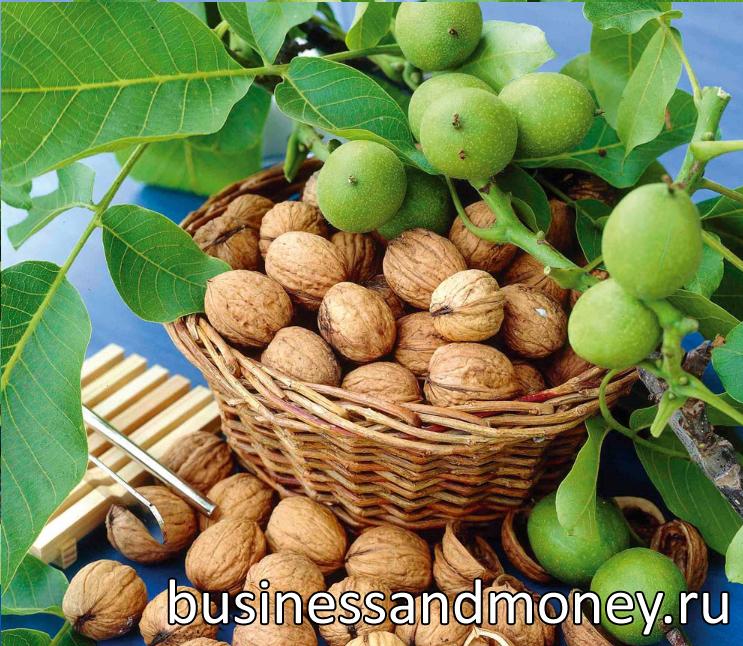 biznes-po-vyrashhivaniyu-orexov